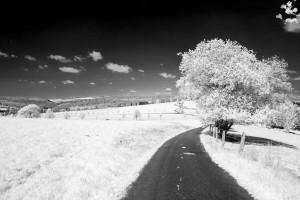 Typische schwarz/weiß Infrarot-Aufnahme